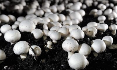 Awareness programme on mushroom cultivation